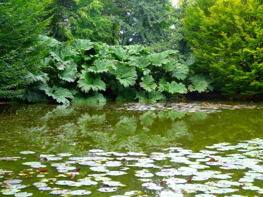 gunnera and water lilies by gijsje