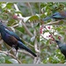 Tui Collage.. by julzmaioro