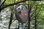 21st Nov 2010 - Entrance Through The Trees