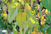 10th Oct 2015 - Leaves