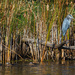 Heron and Wood Ducks by tosee