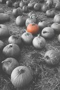 10th Oct 2015 - the perfect pumpkin?