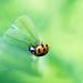 Oh Ladybug! by fayefaye