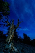 11th Oct 2015 - Twilight in the Bristlecone Pine Forest