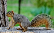 23rd Apr 2015 - Squirrely Jr.