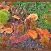 As the Conkers fall ! by beryl