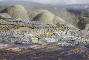 12th Oct 2015 - Shell Geyser Yellowstone