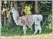12th Oct 2015 - Strange Animals in the English Fields