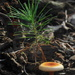3 Little Forest Scene by francoise