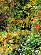 13th Oct 2015 - Autumn colour in the garden....