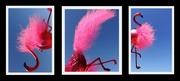 14th Oct 2015 - Pink Flamingo Triptych