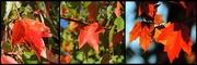 15th Oct 2015 - Three views of Autumn