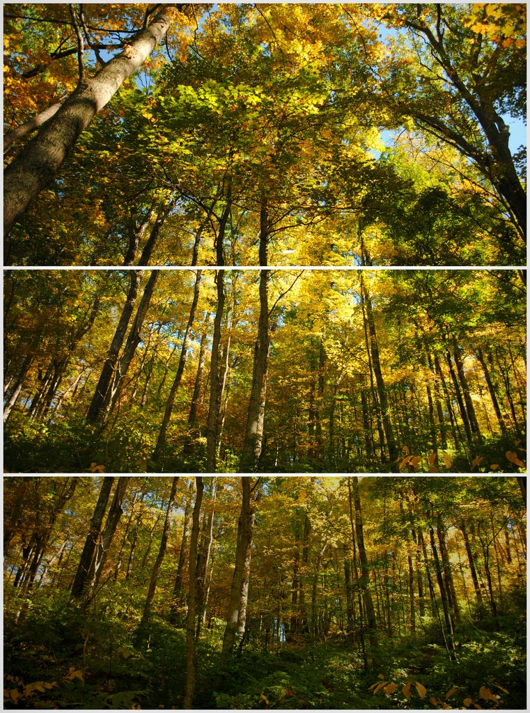 Autumn's Barcode by alophoto