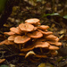 Mushrooms Galore by rickster549