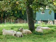 17th Oct 2015 - Old shepherds' hut....