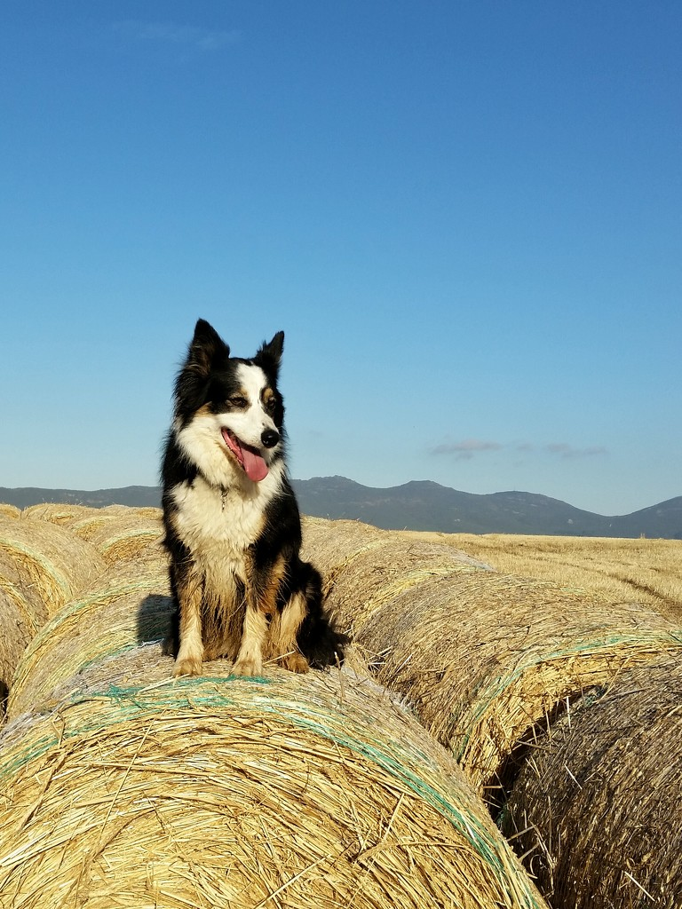 On the Bales!  by salza