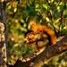 Berries for Breakfast by lynnz