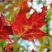 Autumn Beauty by olivetreeann