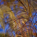 Grasses Blowing in the Wind by tosee