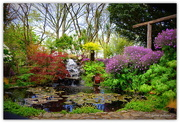 20th Oct 2015 - The Lily Pond...