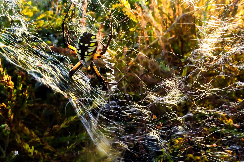 Closer to Halloween by milaniet