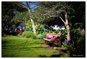 21st Oct 2015 - Jenny's Garden...