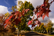 21st Oct 2015 - Fall Color
