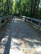 23rd Oct 2015 - Path with a bridge!