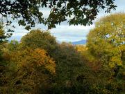 21st Oct 2015 - An autumn scene......