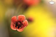 20th Oct 2015 - Flower