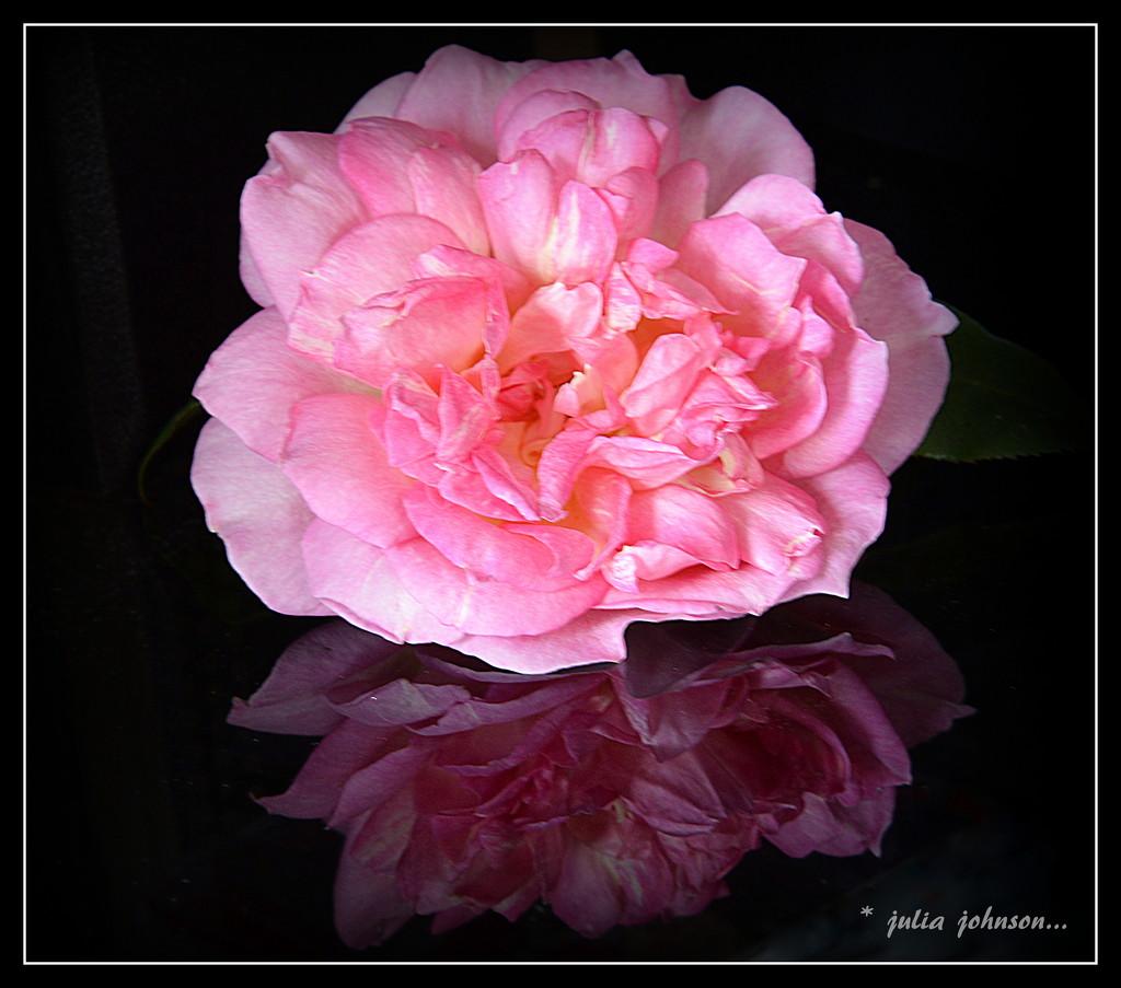 Souvenir de Madame Leonie Viennot.... by julzmaioro