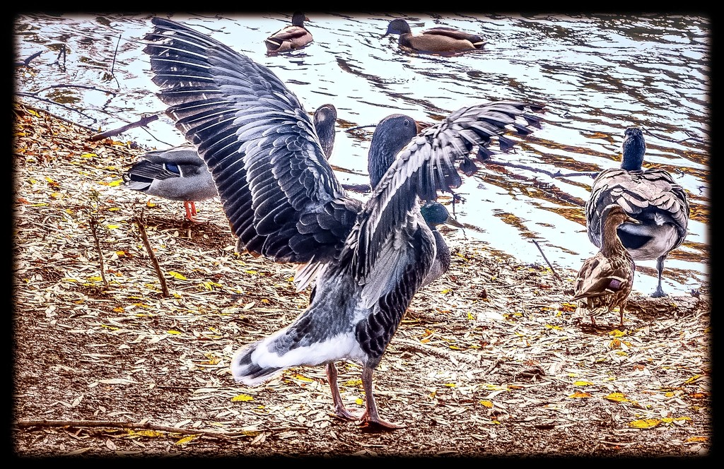 Outstretched Wings  by stuart46