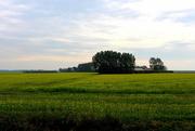 23rd Oct 2015 - Mustard field