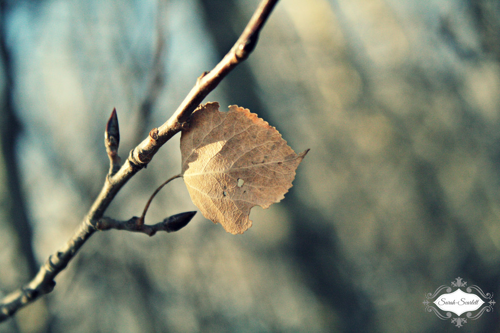 Leaf by sarahlh