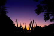 24th Oct 2015 - Silhouette sunset