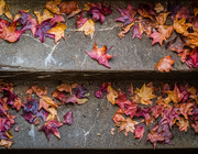 24th Oct 2015 - Leaves on the Stairs