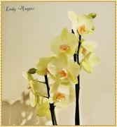 25th Oct 2015 - My Birthday Orchid
