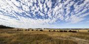 25th Oct 2015 - Bison Range