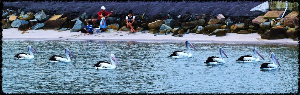 Seven Pelicans at Dusk. by happysnaps