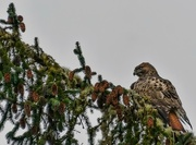 26th Oct 2015 - Keeping Watch