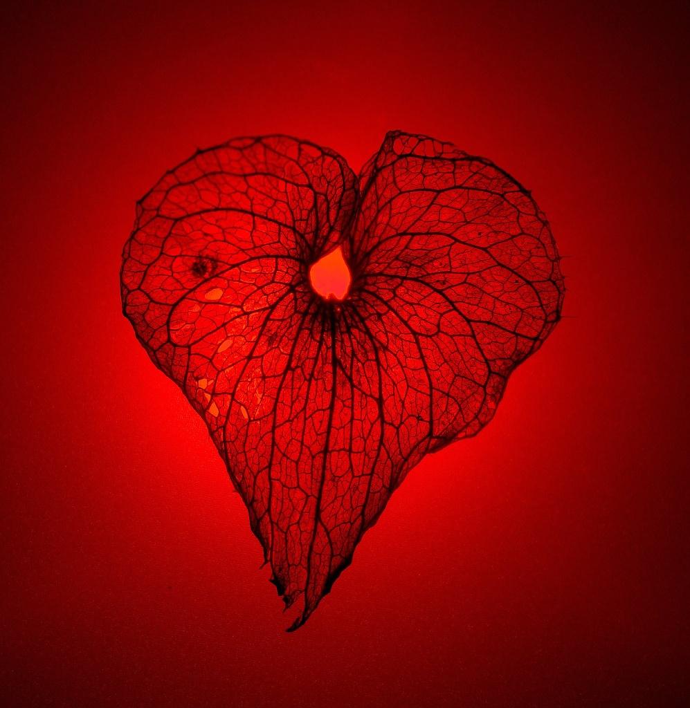 Be still my beating heart! by blightygal