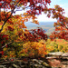 Fall Has Arrived in the Ozarks by milaniet