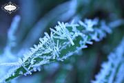 26th Oct 2015 - Frost