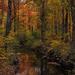 Colors of Autumn 13 by loweygrace