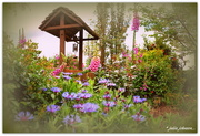 30th Oct 2015 - Julie's  Garden...