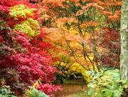 23rd Oct 2015 - Autumn splendour ....