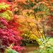 Autumn splendour .... by snowy