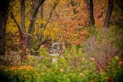 30th Oct 2015 - english garden
