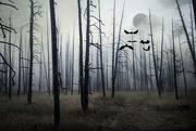 31st Oct 2015 - Foggy Night of Yellowstone