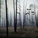 Foggy Night of Yellowstone by pdulis